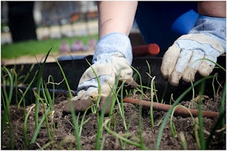 Keeping your Garden Natural: The Best Organic Fertilizers. Organic Garden Networks.