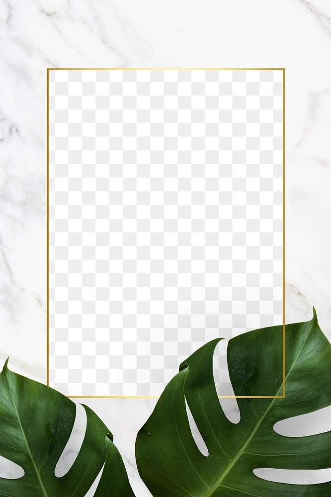Green Monstera Leaf On A White Marble Frame Design Element Free Image By Rawpixel Com Gade In 2020 Marble Frame Tropical Frames Monstera Leaf