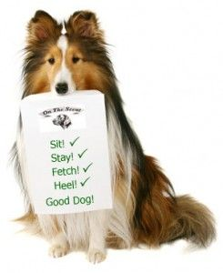 Obedience+Training | obedience training for dogs