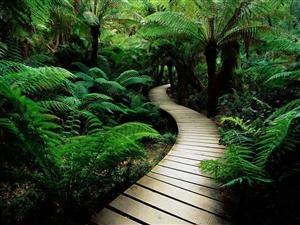 Wonderful Shaded Walkway.Forests, Jungles, Walks, Gardens Paths, Green Nature, Pathways, Desktop Wallpapers, Ferns, Roads