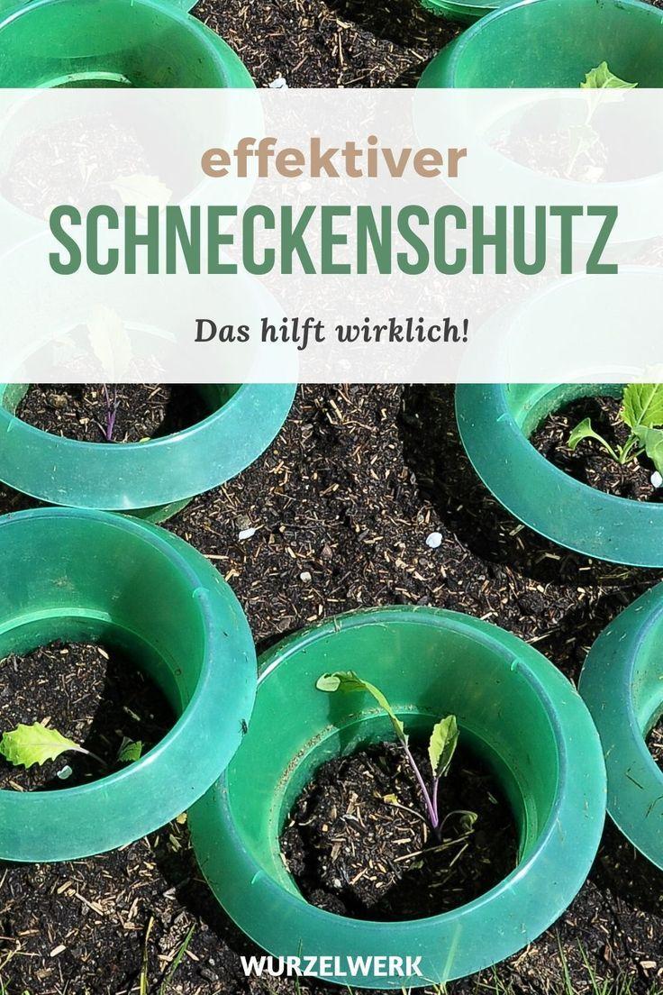 Das Hilft Wirklich Gegen Schnecken Und Nacktschnecken Wurzelwerk In 2020 Schnecken Im Garten Selbstversorger Garten Obstbaume Pflanzen