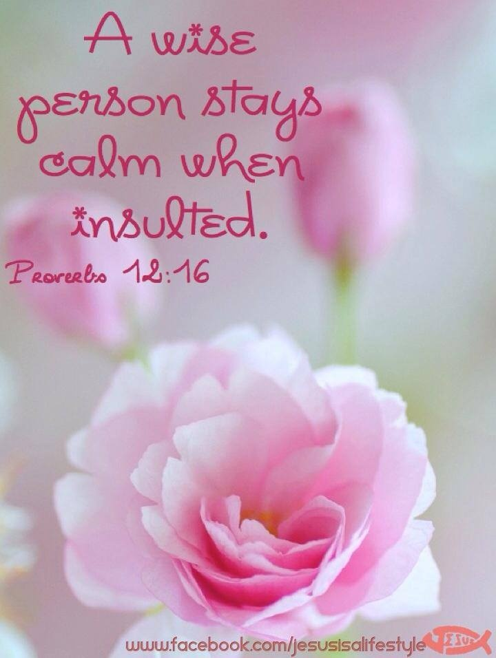 """""""A fool is quick-tempered, but a wise person stays calm when insulted.""""  Proverbs 12:16"""
