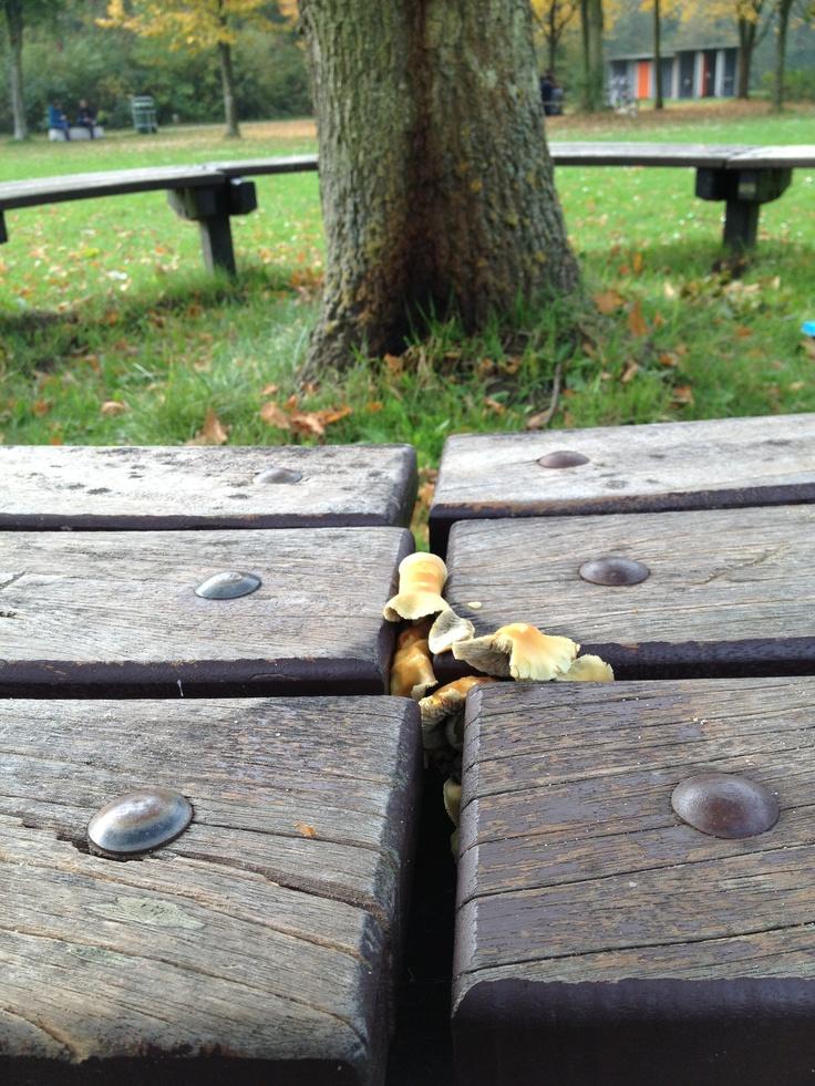 Paddenstoelen tussen de bank