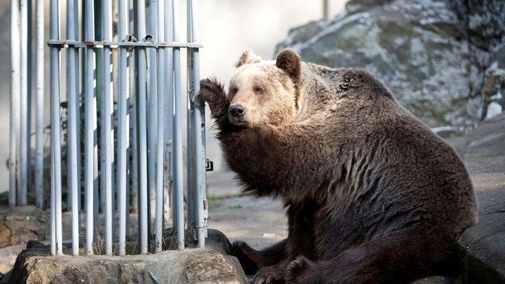 """""""Δράσεις"""" Οικολογία και Περιβάλλον: Θέλουμε να μπει τέλος στην αιχμαλωσία άγριων ζώων ..."""