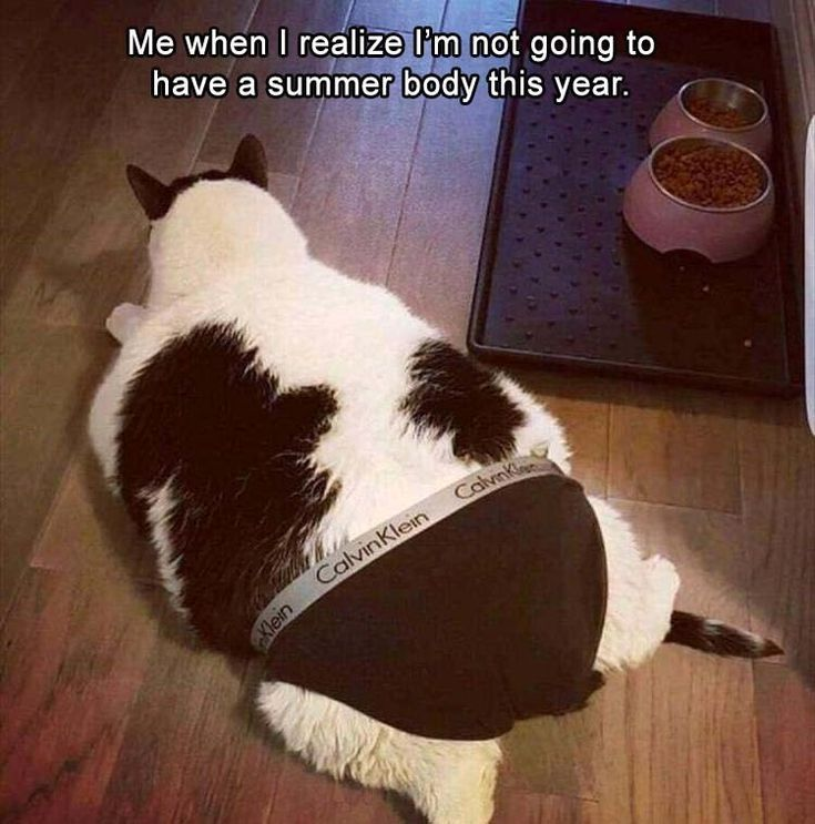 17 Cat Memes To Make You Laugh Until You Cry