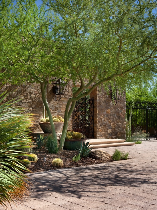 64 best desert plants tree images on pinterest desert for Landscape design phoenix