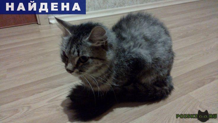 Найдена кошка или кот (не особо понимаю как определять г.Химки http://poiskzoo.ru/board/read29772.html  POISKZOO.RU/29772 Вчера поздно вечером не смогла пройти мимо этой молодой кошечки (или кота))), стало очень жалко. Кошечка на улице находится не мало, так как сильно уж худая, но видно что домашняя. У кошки скорее всего стрижка, длинная шерсть на конце хвоста и на голове, а на туловище короткая. За ночь стало известно, что ходит в лоток, я ей положила коробочку с порванной газеткой, она…