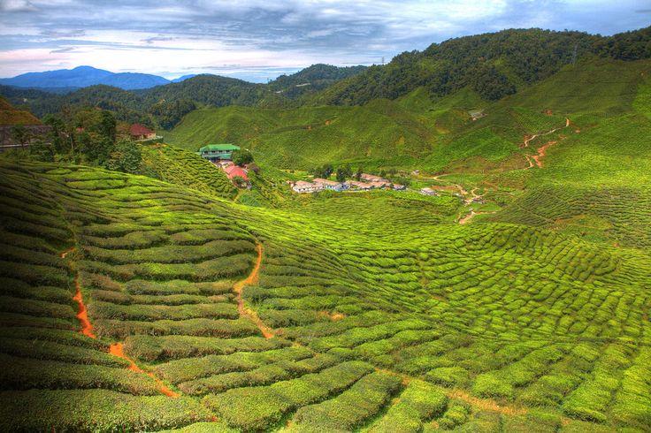 På denne oplevelsesrige rundrejse starter jeres eventyr i den pulserende hovedstad Kuala Lumpur. Næste stop på turen er Belum regnskoven, en af verdens ældste regnskove, hvor I skal opleve junglen, sejle på bambus flåder og udforske regnskovens plante og dyreliv. Efter nogle oplevelsesrige dage i junglen, tager I til det smukke Cameron Highland, hvor I kan opleve bølgende bakker, fantastiske te plantager og nyde det dejlige klima. I slutter turen af på paradisøen Pangkor.