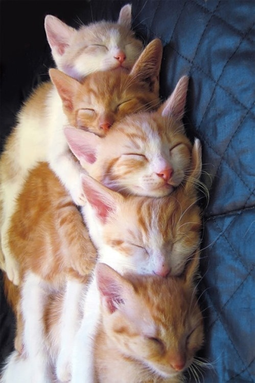 are you kidding me? How did you arrange these comatose felines?? Cute.