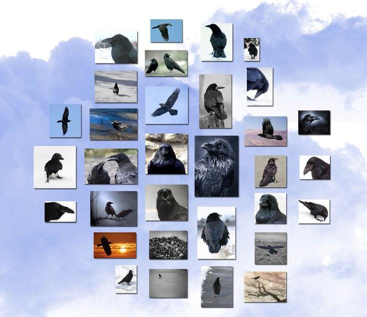 #raven; #crow
