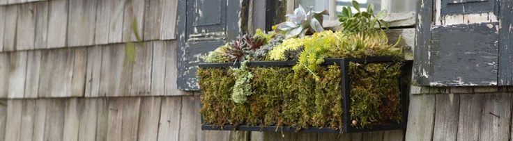 Garage Sale Hunt for a metal framed box + Moss = Prettiness.