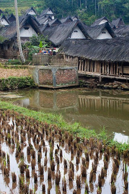 A small paddy field near the Kampung Naga traditional village - Java, Indonesia