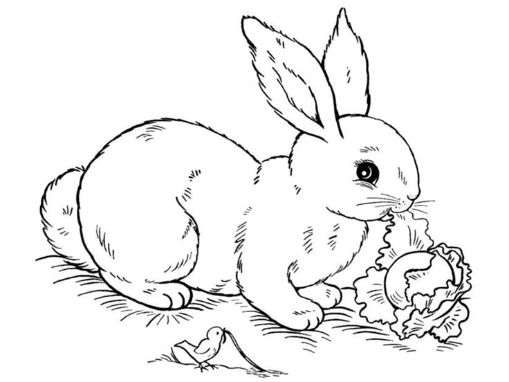 заяц раскраска - Поиск в Google