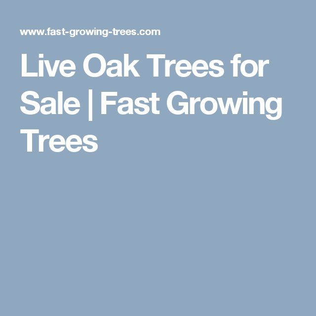 Live Oak Trees for Sale | Fast Growing Trees