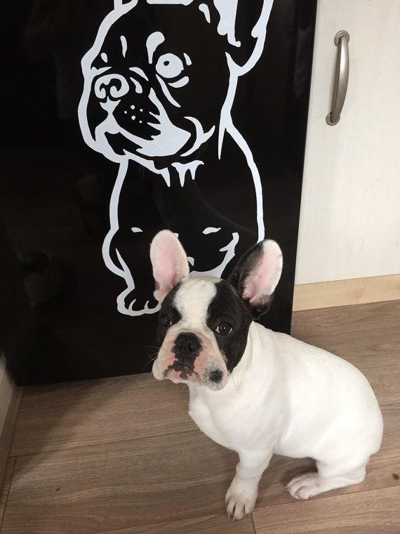 Dog Decal French Bulldog Puppy Vinyl Sticker Decal от PSIAKREW