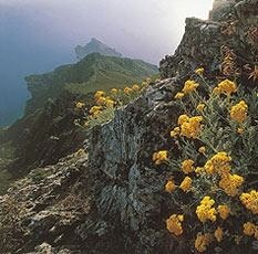 """The coveted oil of IMMORTELLE, comes from the Helichrysum italicum plant, harvested in Corsica, France. Try our """"liquid gold"""" IMMORTELLE REGENERATIVE MIST  www.metamourskincare.com"""