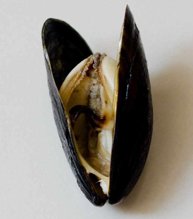Miesmuschel | lacapocuoca.at