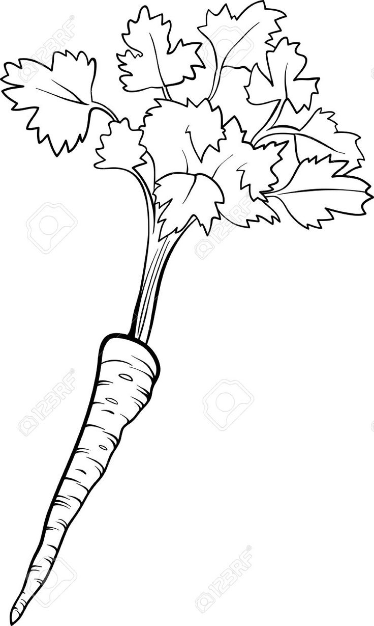 18869102-Black-and-White-Cartoon-Illustration-of-Parsley-Root-Vegetable-Food-Object-for-Coloring-Book-Stock-Vector.jpg (778×1300)