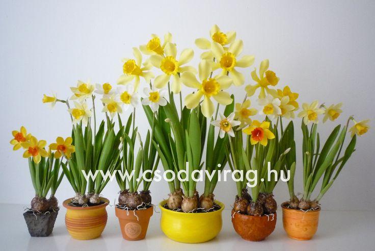 Narcissus (Nárcisz) - My clay flower https://www.facebook.com/Csodavirag