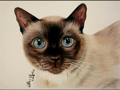 Learning to draw fur with colored pencils - How to draw a kitten - YouTube