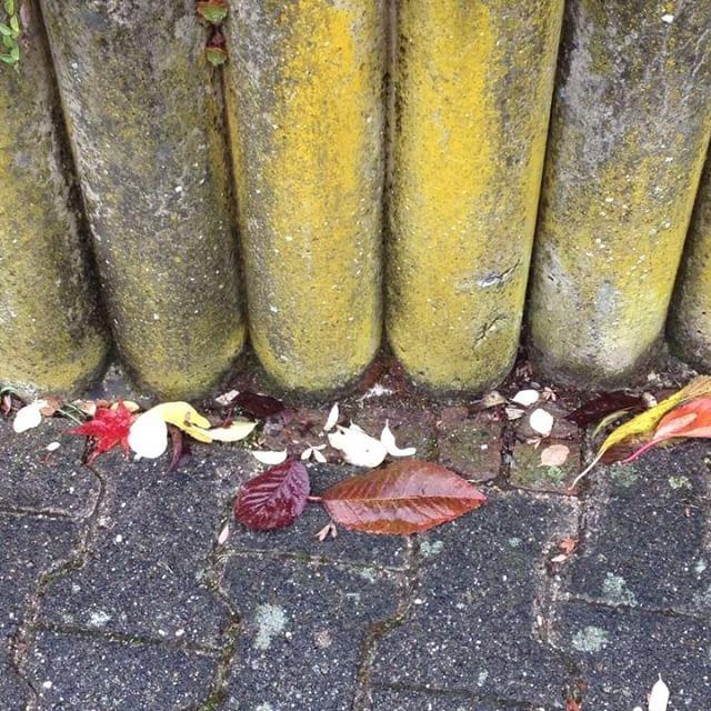Spectacular  leaf bl tter leaves laub mos moos cement concrete