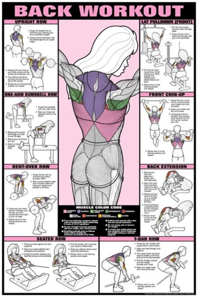 Back Professional Wall Workouts  jewelry Fitness BACK Factor indian online Co Ed Workout WORKOUT Chart designer Exercise and Poster Venus   Gym