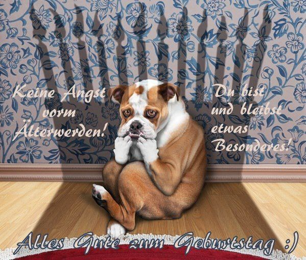 Lustige Geburtstagswunsche Hunde Beautiful 48 Bilder Mit Dem Tag Hund Alles Liebe Zum Geburtstag Di 2020