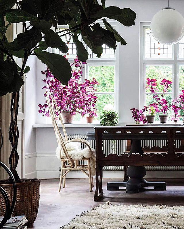 Palettblad när de är som mäktigast hemma hos Malin Persson. Se hela vackra hemmet i nya numret! Foto: Hobert och Krupa