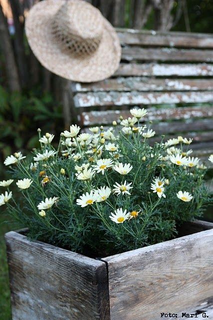A crate of daisies.