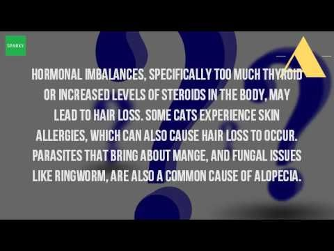 What Causes Hair Loss In Cats? - WATCH VIDEO HERE -> http://bestcancer.solutions/what-causes-hair-loss-in-cats-2    *** causes of cancer in cats ***   This article by petmd details the causes and possible treatment of hair loss in cats 3 jan 2017 why is my cat going bald? Should i be concerned? What cause what treatment? Find out solutions this faq 5 jun 2009 Cat losing hair? Hair (alopecia) symptoms &...