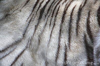 White Tiger Fur | Animal Textures | Pinterest