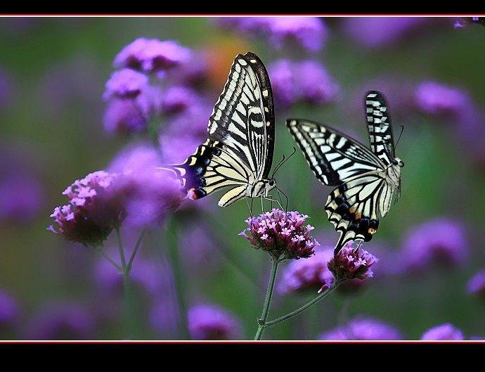 Pin Von Christine Potocar Auf Butterflies Moths Tiere Wild Tiere Wild