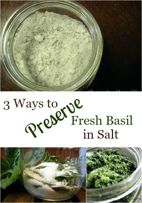 ¿Quieres el sabor fresco de albahaca durante meses?  Utilice 3 maneras de preservar la albahaca en la sal en cuestión de minutos.  No puedo creer lo fácil que es!