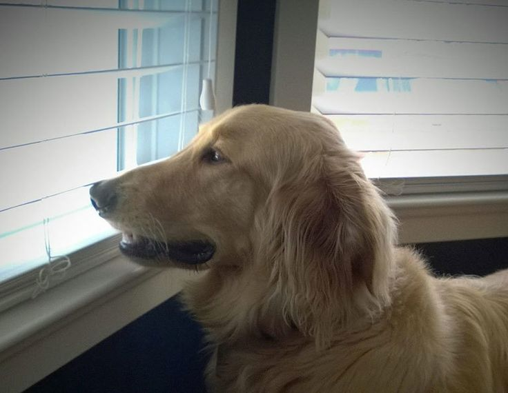Va dal toelettatore per un appuntamento di routine e non torna più a casa... » Fbsocialpet.com: il social forum per cani, gatti, cavalli, tutti gli animali