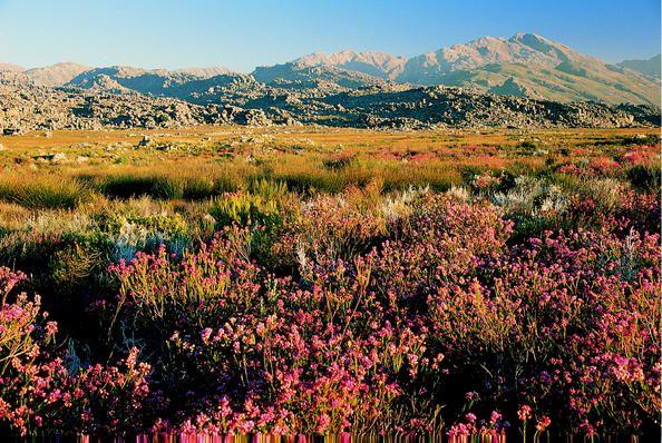 Aires protégées de la Région florale du Cap Afrique du Sud