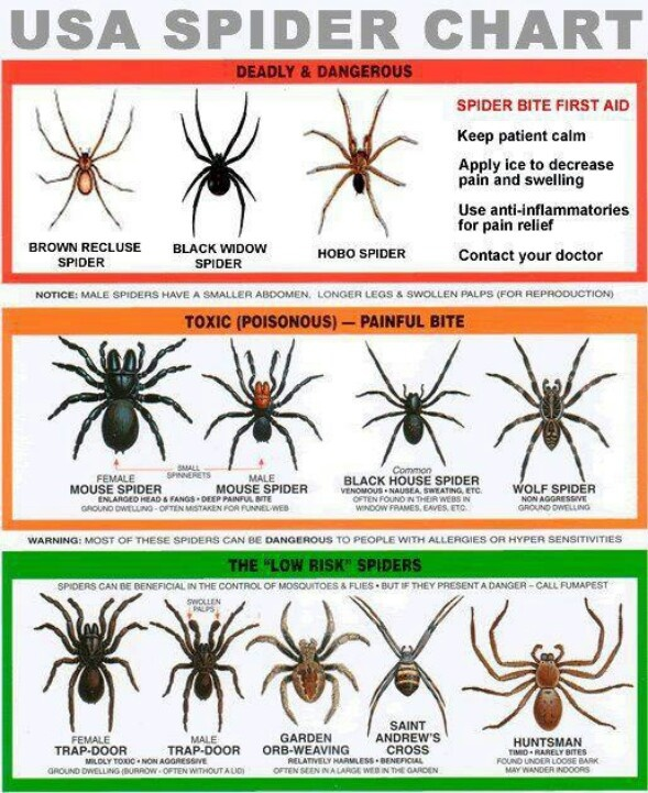 Good to know!!! By the way, spiders don't like peppermint.  Get some peppermint essential oil snd wear it when you are outside.