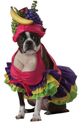 Cha Cha Cha! Dog Costume - Pure Costumes I just died picturing Darla in this…