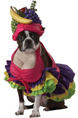 Halloween 2013 - Fantasias para cachorros engraçadas e criativas
