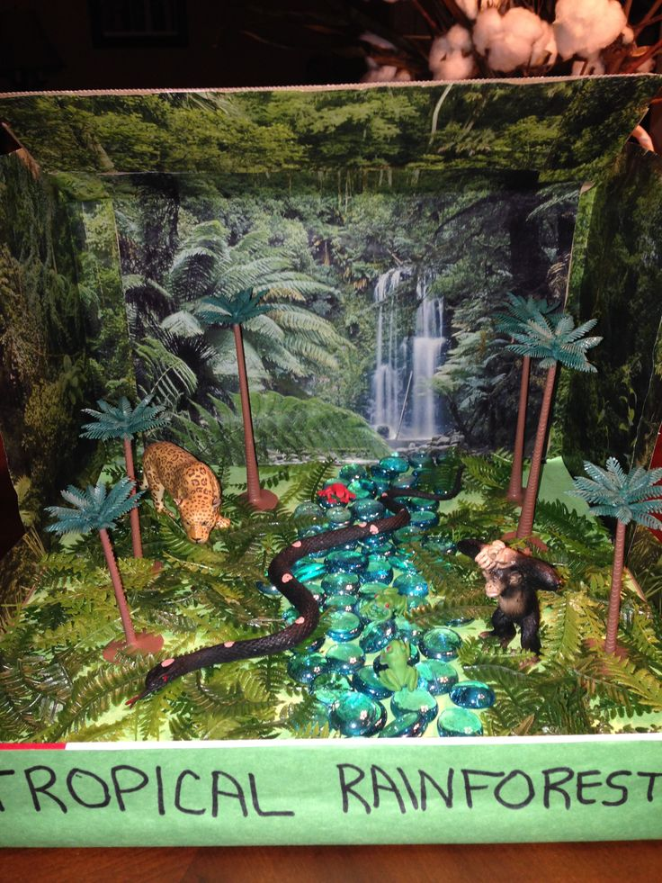 25+ best ideas about Rainforest biome on Pinterest | Rainforest ...