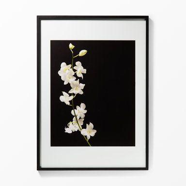 Tavla orkidé, 50x70 cm, svart