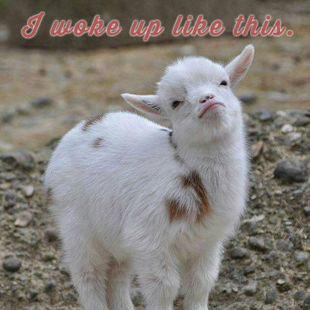 778 Best Goat Farm Images On Pinterest: 42 Best Animals Expressing Themselves Through Lyrics