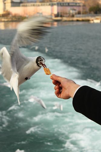 This works! We feed the seagulls on the ferry to the Olympic Peninsula--they do have to be hungry. Please check what is quality food tho.