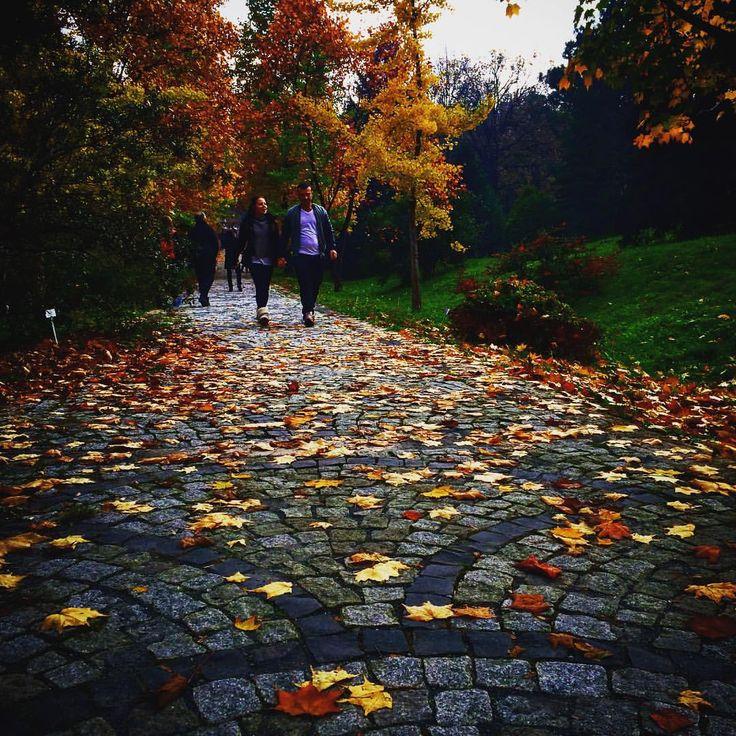 Atatürk Arboretumu in İstanbul, İstanbul