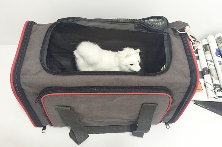 Животных путешествия раза rx состоянии водонепроницаемый вентиляция Pet перевозки багажа с мягкой подушкой внутри размеры 46 * 26 * 28 см km_30271купить в магазине OSGOODWAYнаAliExpress