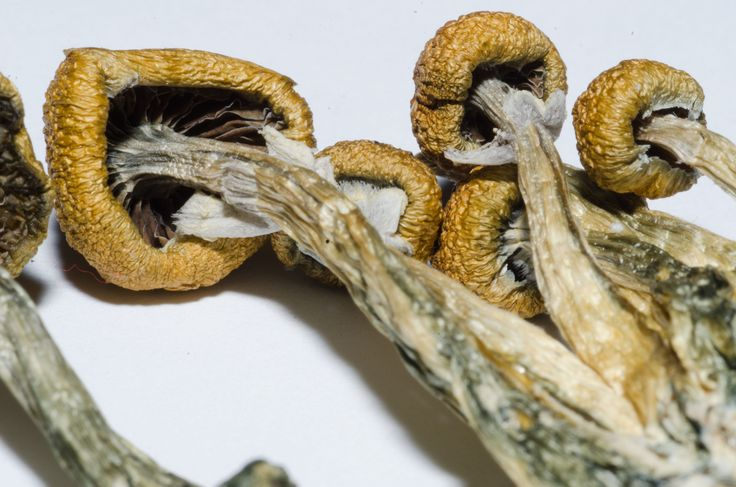 Benefits Of Microdosing With LSD And Psilocybin Mushrooms