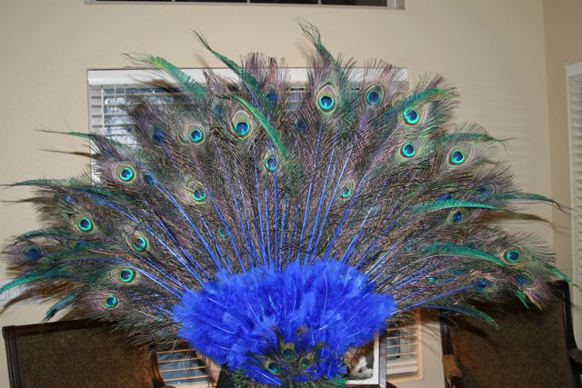 Peacock tail for halloween costume diy tutorial for Peacock crafts for adults