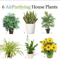 """These plants are especially good at being """"air filters"""" which is great for someone with asthma, allergies, or just likes the idea…  Bamboo Palm, Snake Plant, Areca Palm, Spider Plant, Peace Lily, and Gerbera Daisies"""