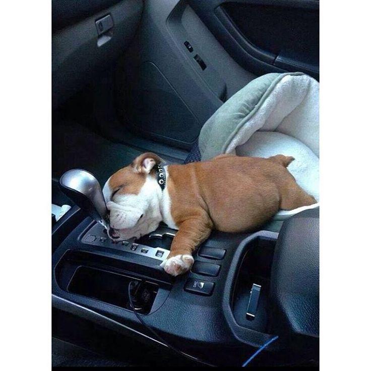 Falling asleep at the wheel http://ift.tt/2iJSYjz