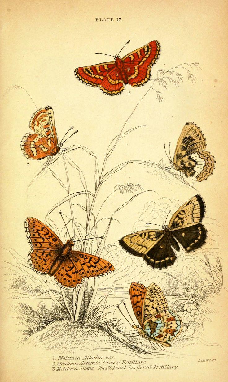 Vintage butterfly illustration loads of free downloads!