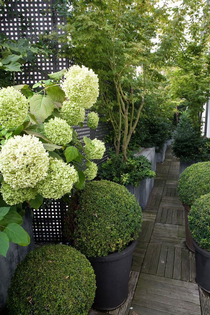 Lush terrace but the boxwoods need to be planted in different pots!